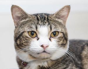 טיפול בחתולים - המלצות