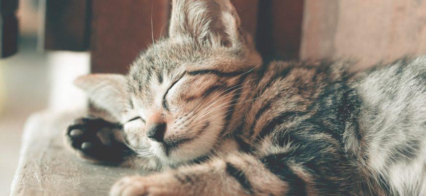 5 טיפים מנצחים לטיפול מסור בחתול שלכם