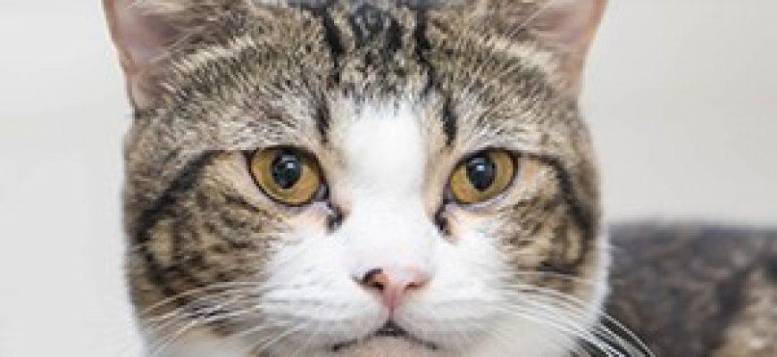 טיפול בחתולים – המלצות