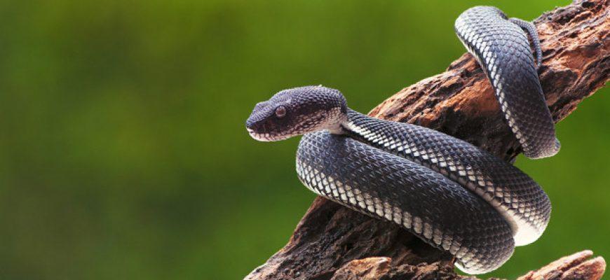 פחד מנחשים  – כל מה שצריך לדעת