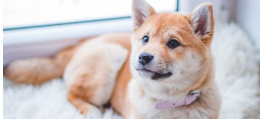 ספא לכלבים: האם זה באמת מומלץ?