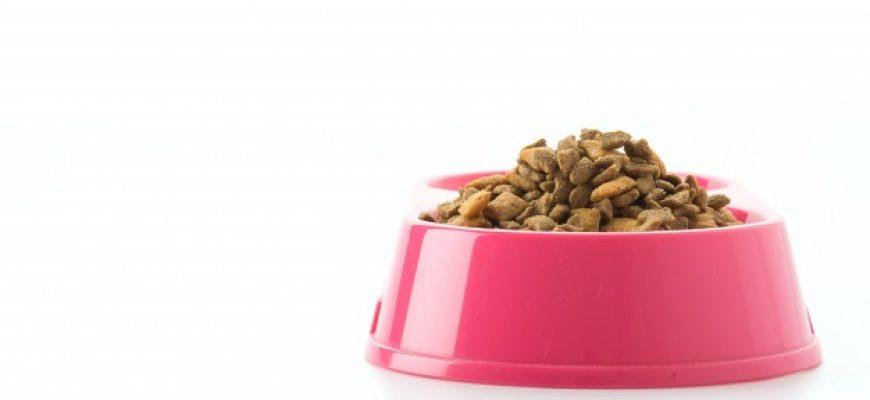 מצא את ההבדלים: האם אוכל לכלבים ולחתולים הוא זהה?