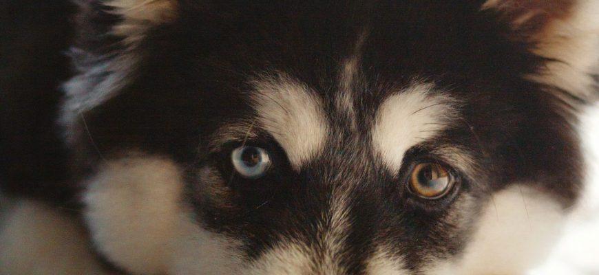 אוכל לכלבים: איך לעשות את הכלב שלכם מאושר?