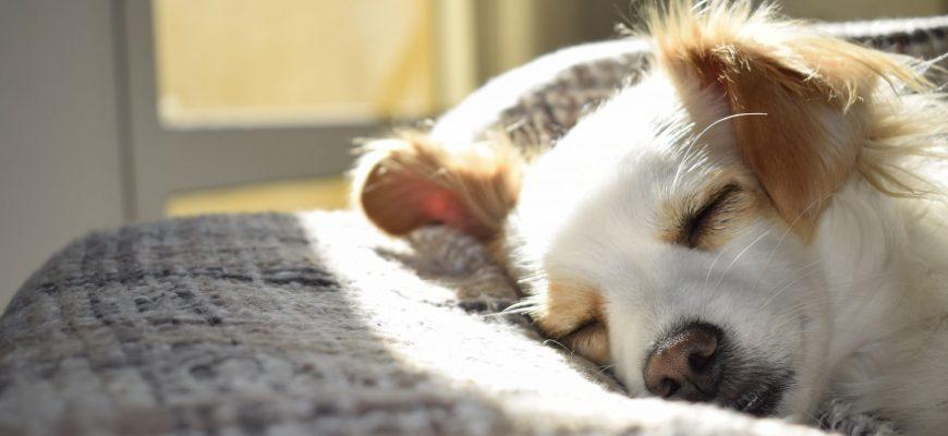 מחפשים פתרון לכלב לזמן החופשה שלכם? הכירו את פנסיוני הכלבים בצפון