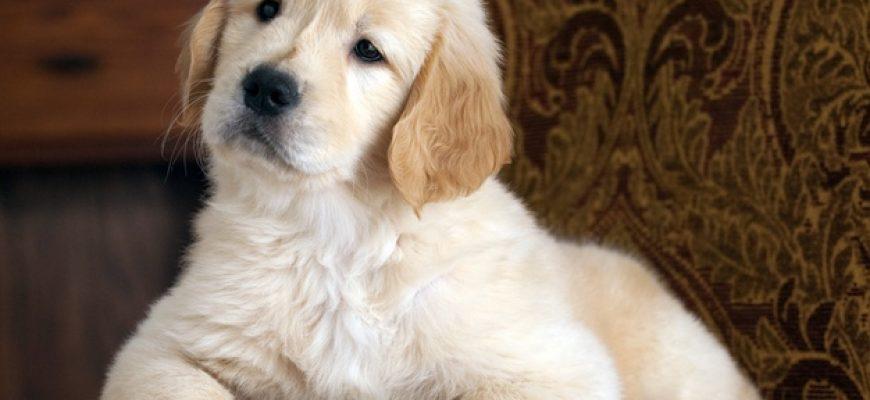 5 האביזרים שישדרגו את חיי הכלב שלכם
